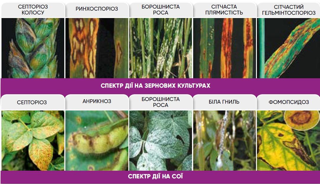 Аканто Плюс Преимущества применения на зерновых культурах