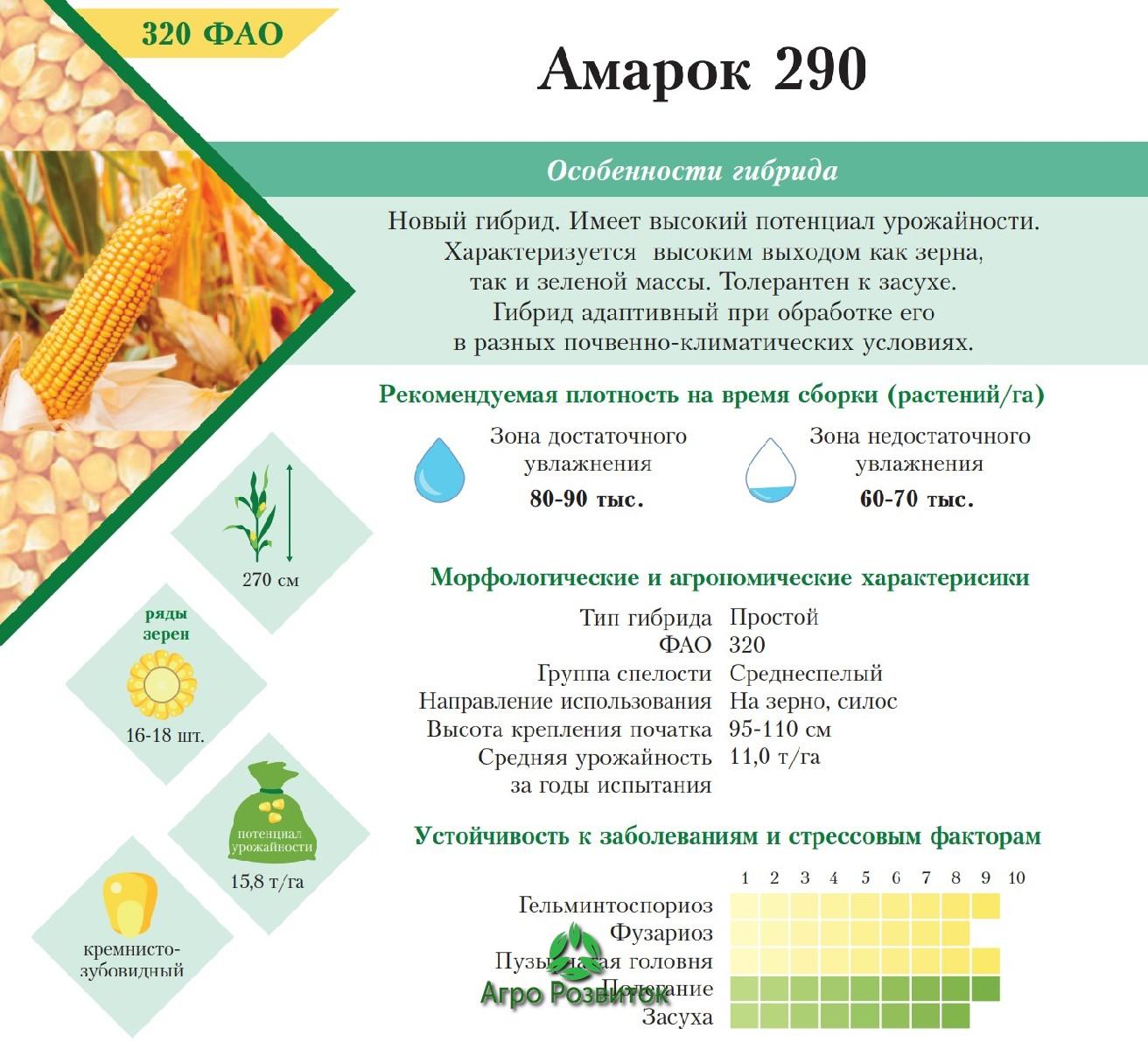 Кукуруза Амарок 290 - Цена Семян (ФАО 320)