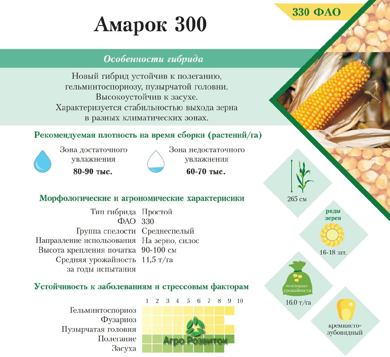 Кукуруза Амарок 300 - Цена Семян (ФАО 330)