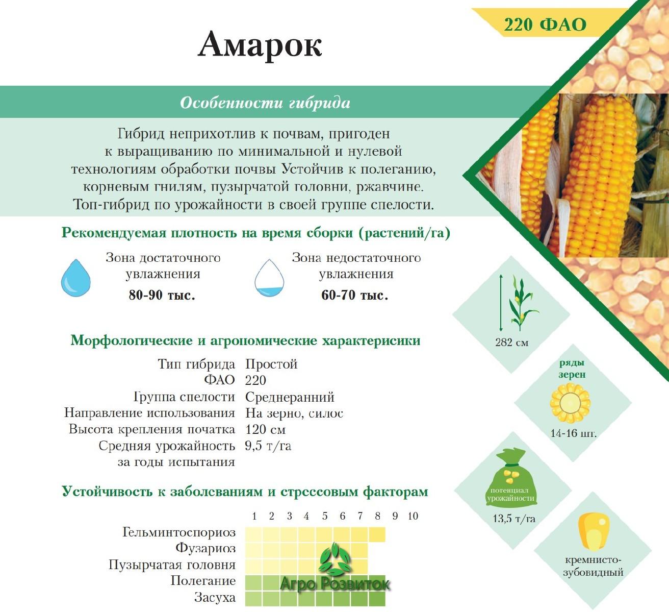 Кукуруза Амарок - Цена Семян (ФАО 220)