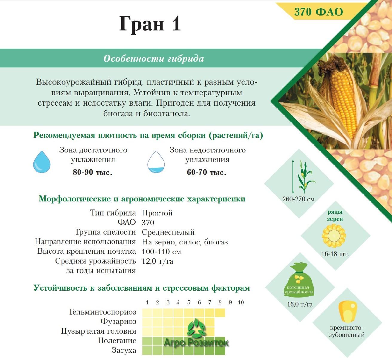 Кукуруза Гран 1 - Цена Семян (ФАО 370)