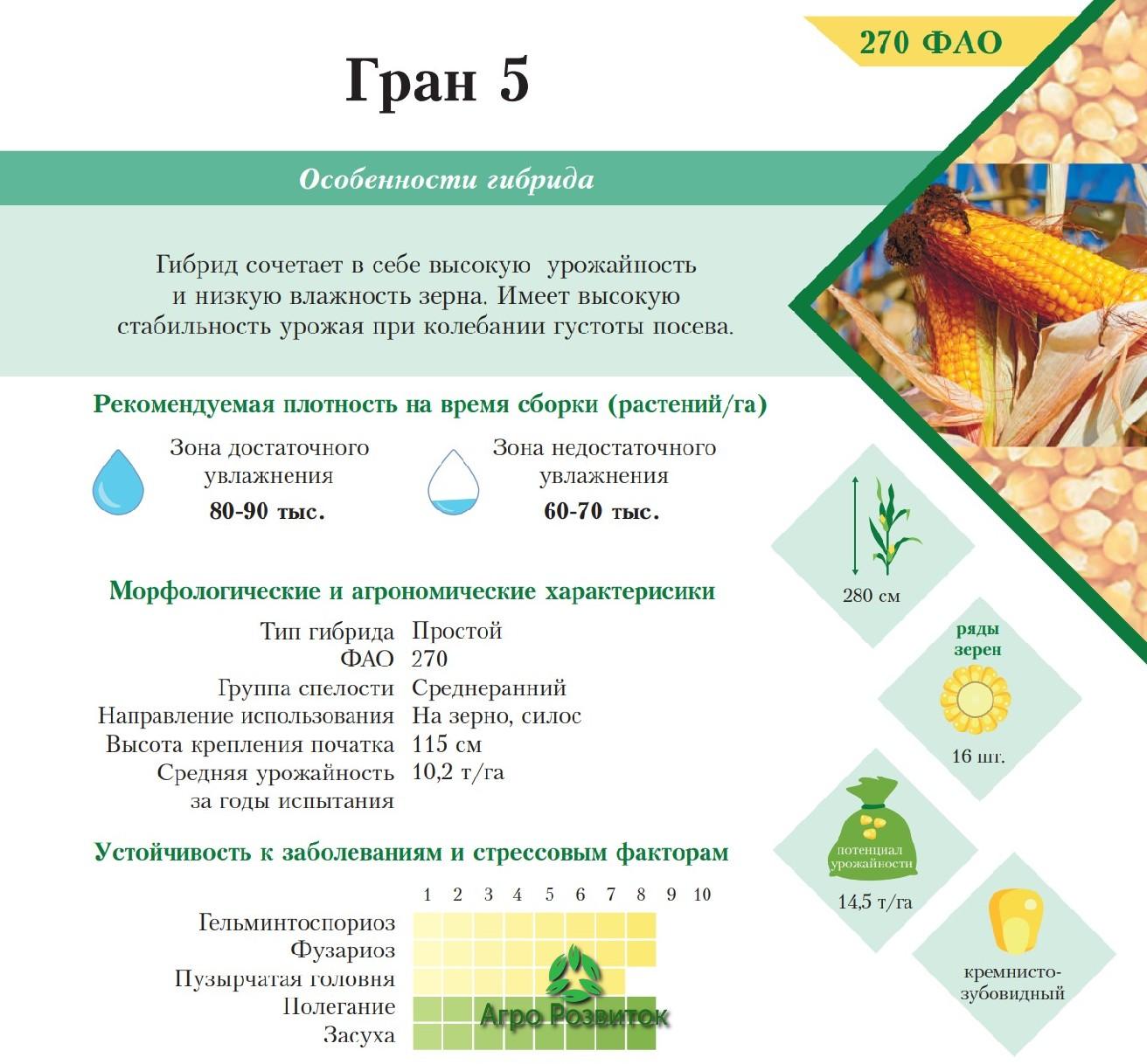 Кукурудза Гран 5 - Ціна Насіння (ФАО 270)