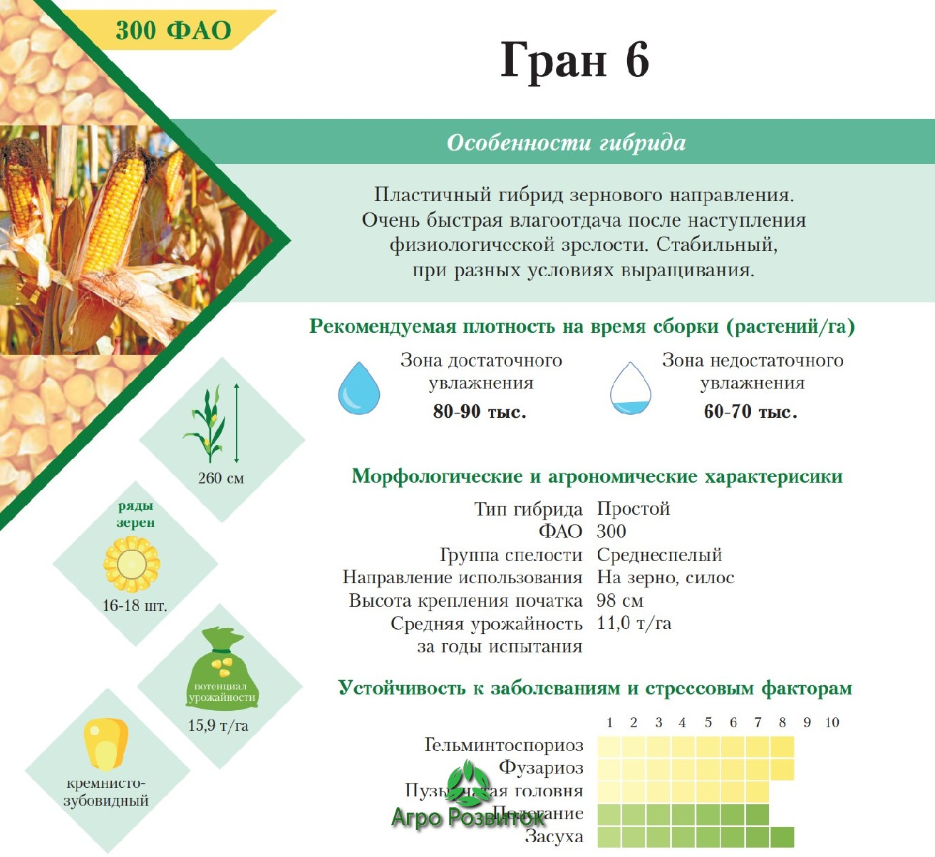 Кукуруза Гран 6 - Цена Семян (ФАО 300)