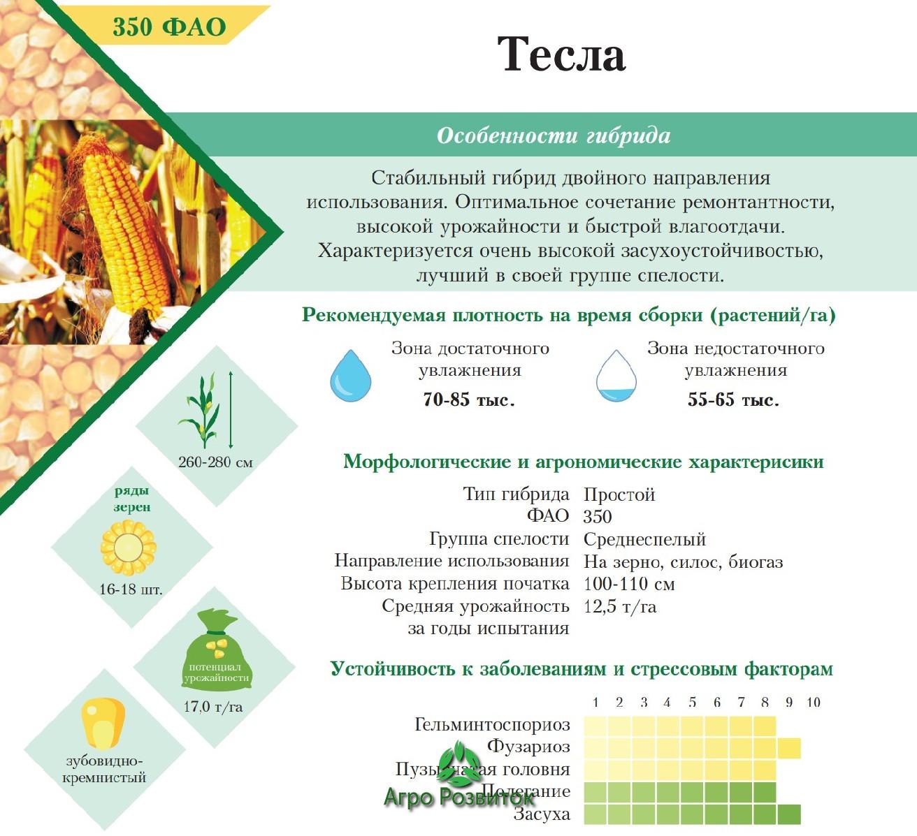 Кукуруза Тесла - Цена Семян (ФАО 350)