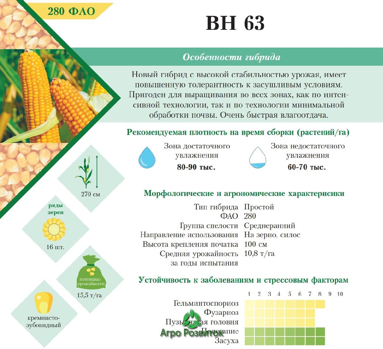 Кукуруза ВН 63 - Цена Семян (ФАО 280)