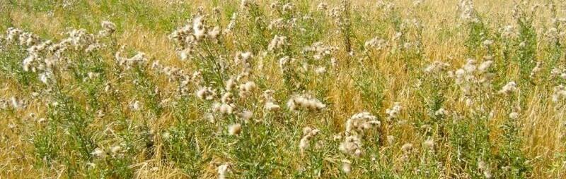гербициды от сорняков на поле