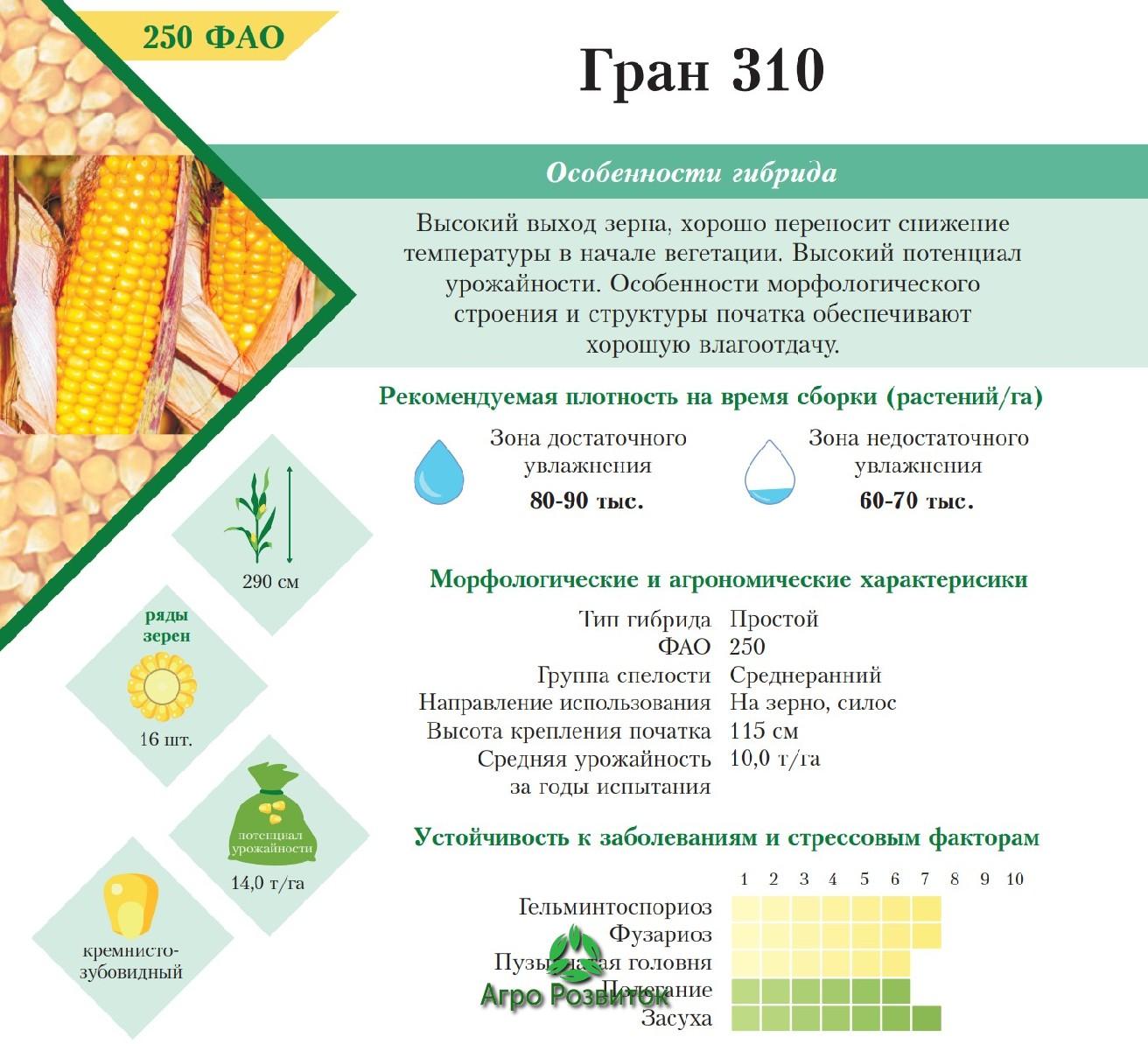Кукуруза Гран 310 - Цена Семян (ФАО 250)