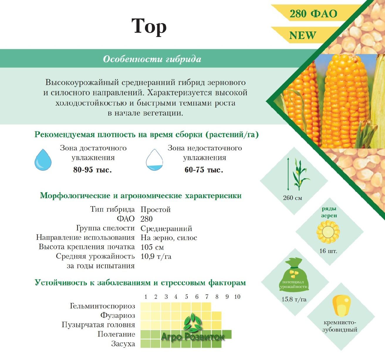 Кукуруза Тор - Цена Семян (ФАО 280)