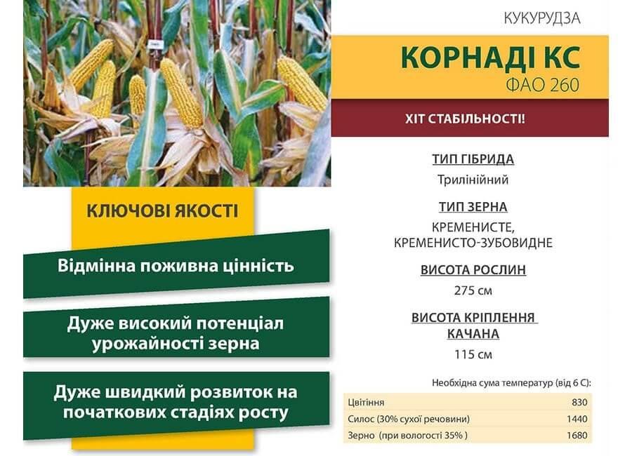 Семена Кукурузы Корнади КС Коссад Семанс
