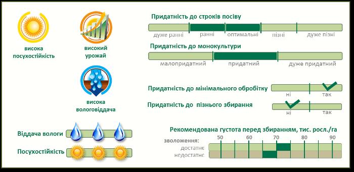 Насіння Кукурудзи П9074 (P9074) характеристики