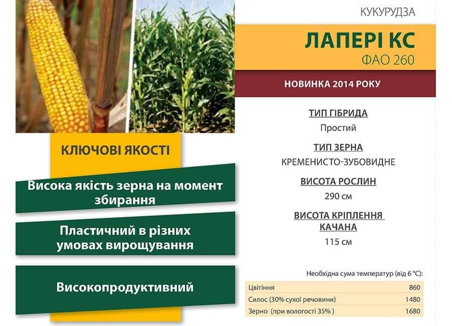 Семена кукурузы Лапери КС (Laperi CS)