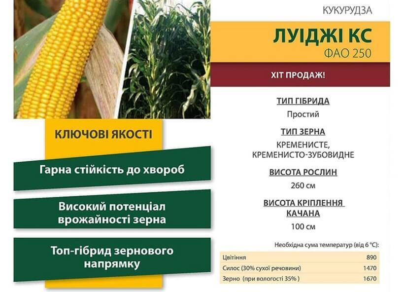 Семена Кукурузы Луиджи КС (Luigi CS) Коссад Семанс
