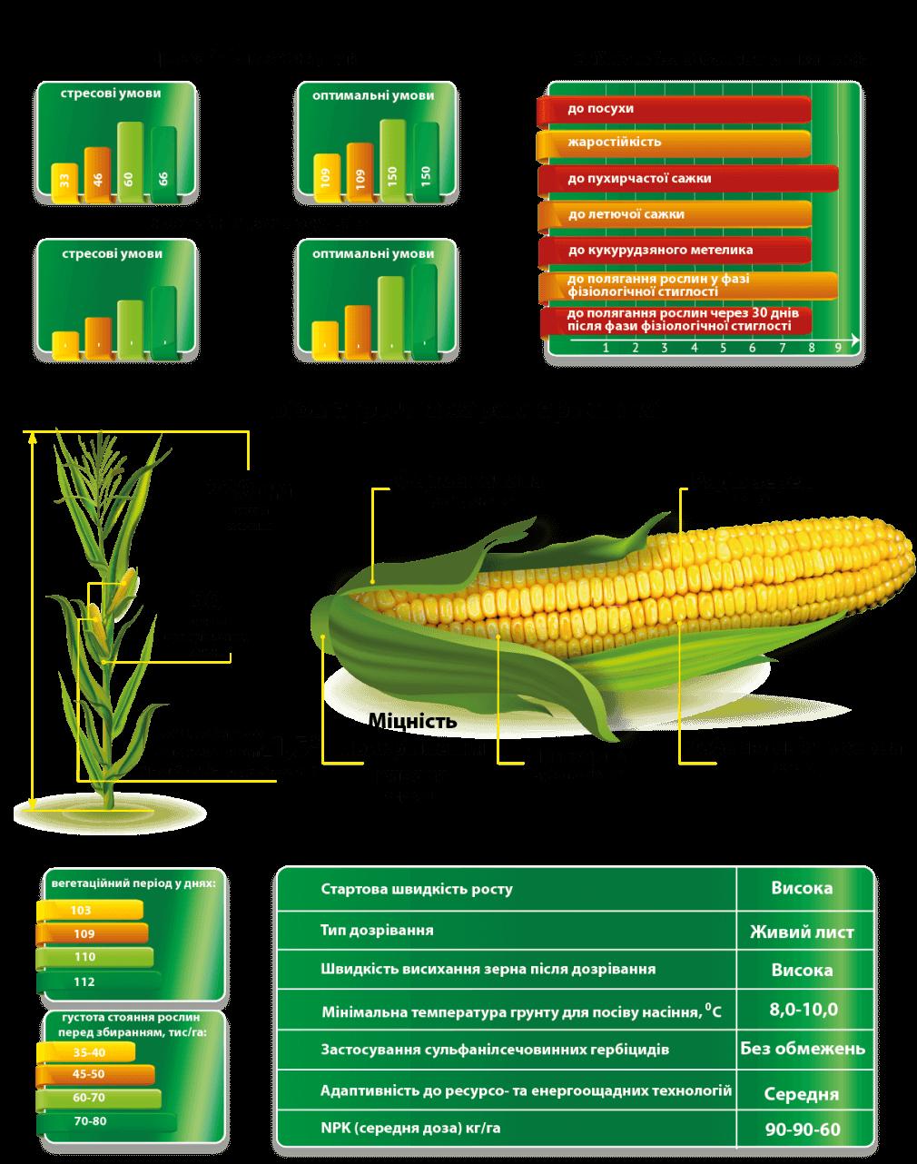 Урожайность кукурузы ДМСГроно и Характеристики
