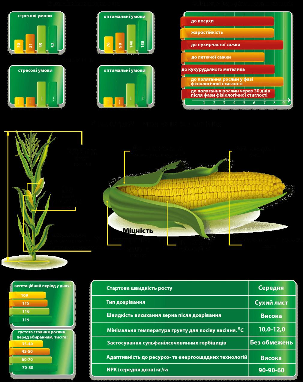 Урожайность гибрида кукурузы Сплав МС и Характеристики