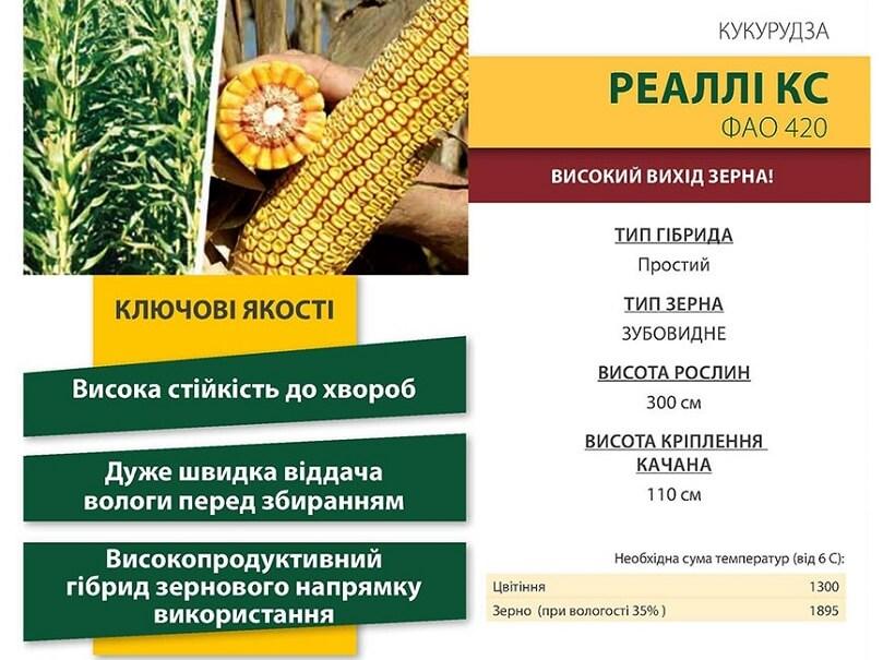 Семена Кукурузы Реалли КС (Realli CS) Коссад Семанс