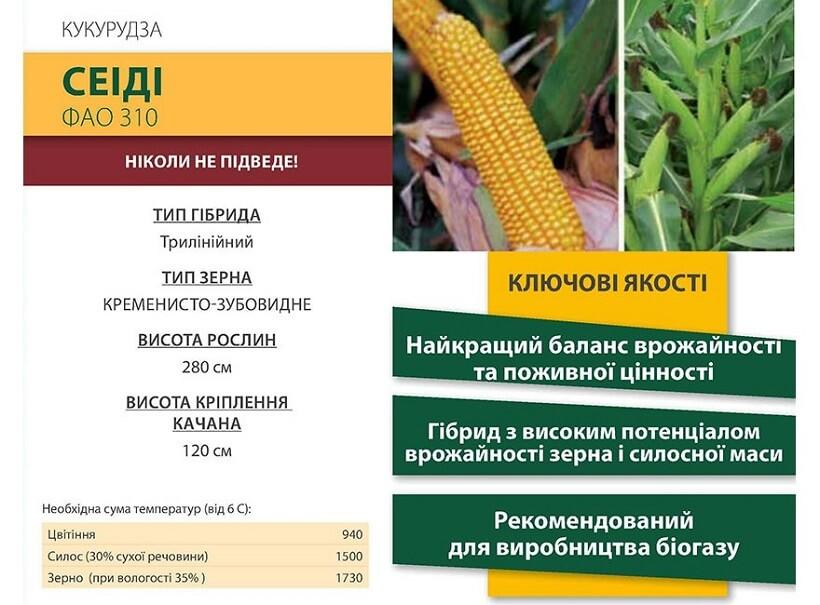 Семена Кукурузы Сеиди КС (Seiddi CS) Коссад Семанс