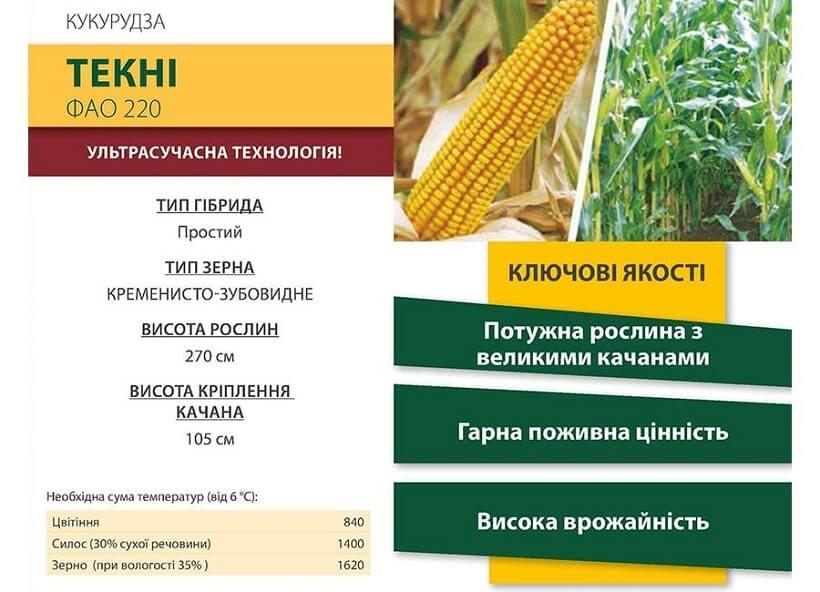 Насіння Кукурудзи Текні (Tekni CS) Коссад Семанс