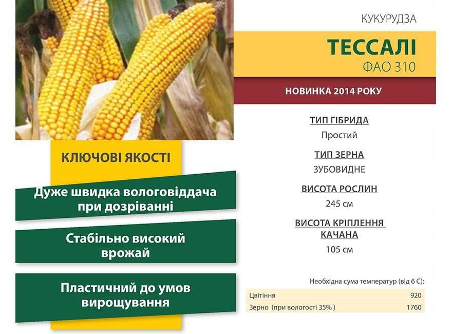 Семена Кукурузы Тессали КС (Tessali CS) Коссад Семанс