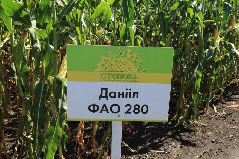Кукурудза Даніїл ФАО 280