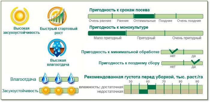 Насіння Кукурудзи П9721 (P9721) Піонер
